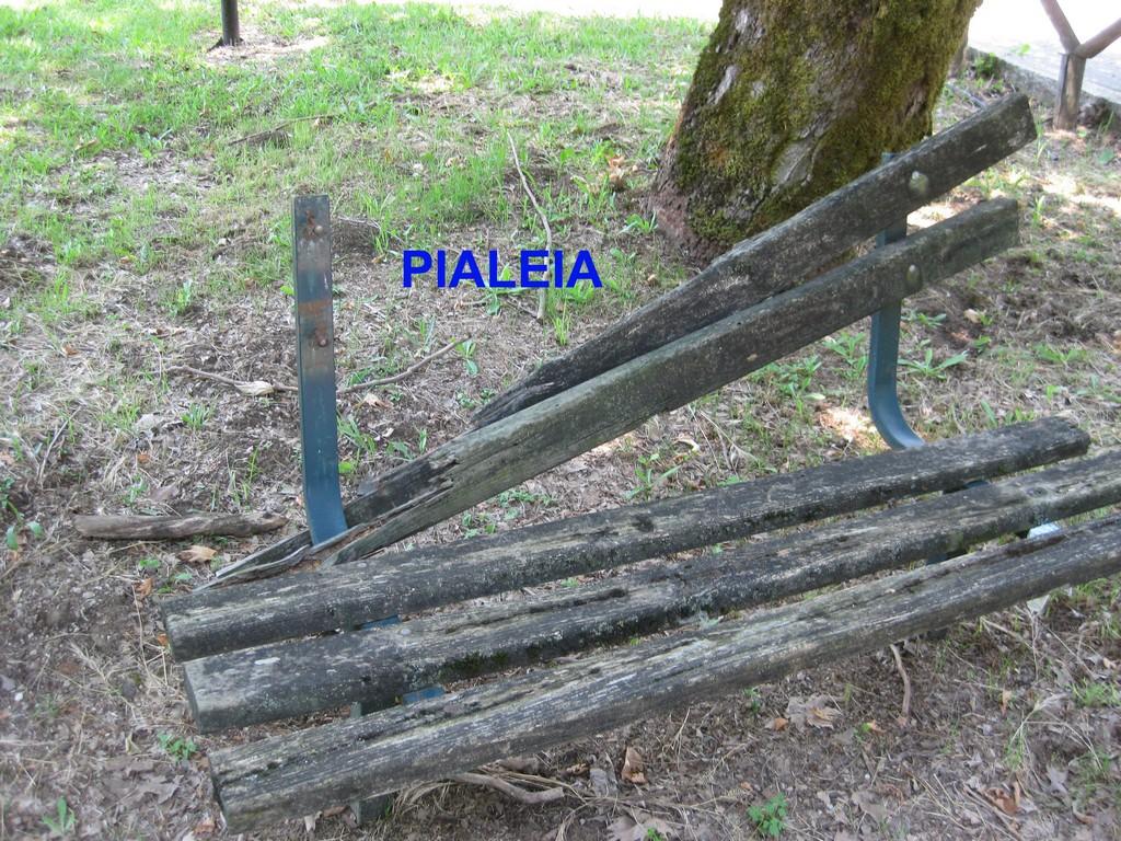 Pialeia (6) copy
