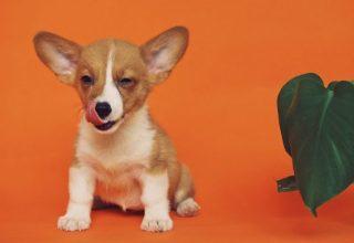 200211140748_puppy-1280x720