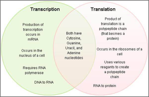 dna replication and transcription venn diagram