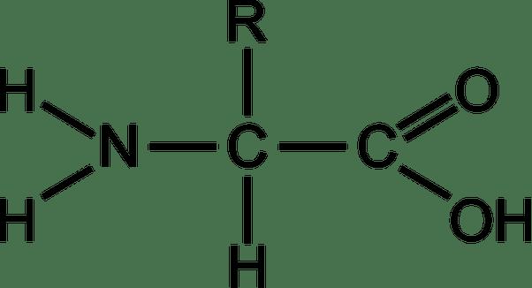 diagram amino acid