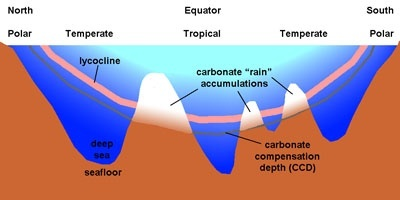 Why Do Carbonate Sediments Accumulate On The Shallower