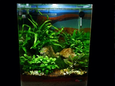 What Are The Best Nano Tank Freshwater Plants Quora