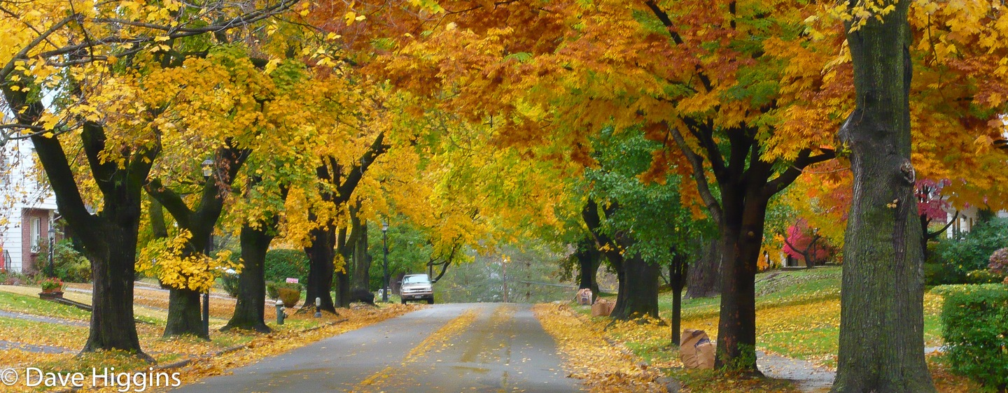 Fall Colors Wallpaper New England The Trouble With Hurry Quantum Sense