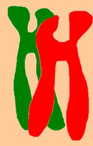 Beitragsbild Chromatidentetrade