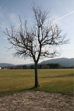 Small image of tree