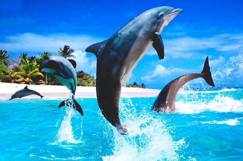 High Definition Animal Wallpapers Delfines Www Pixshark Com Images Galleries With A Bite
