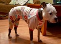 dog pajamas | Raw Feeding Fun