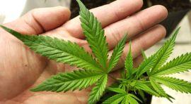 Medicina y marihuana
