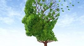 Tome clases de educación holística y viva de manera integral y saludable