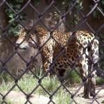 Los Angeles Zoo5