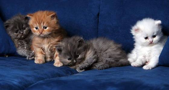 Riparare un divano graffiato dal gatto.
