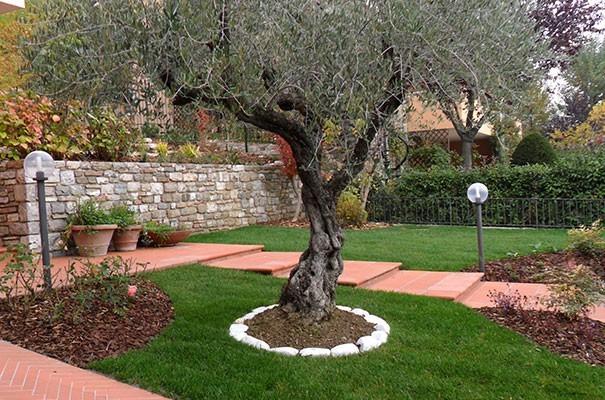 Progetto del giardino di casa. - Questioni di Arredamento