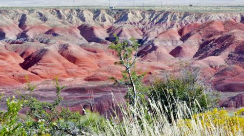 Painted Desert, incluido dentro del Parque Nacional del Bosque Petrificado