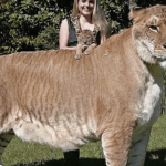 2014-04-14 09-10-12_100 Most Weirdest and Rarest Animals in the World Real Pictures (Not Photoshoppe