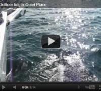 Delfiner følger Quiet Place