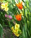 tulip-fest-2008-2