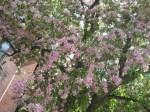spring-flowers-17