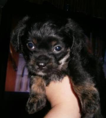 Milo 5 weeks