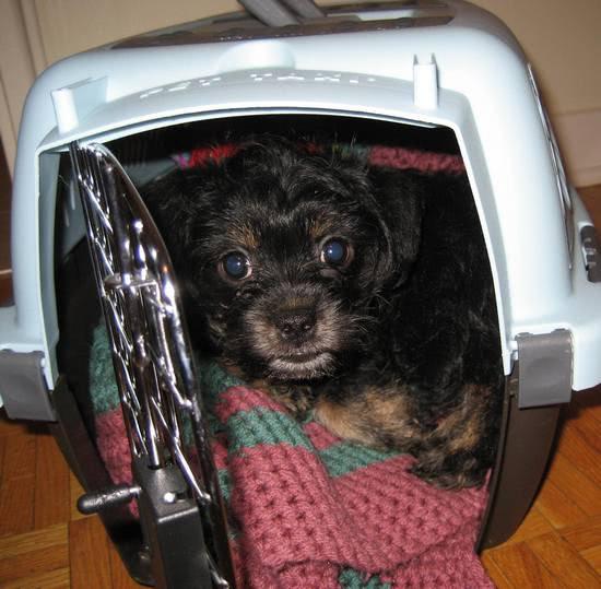 Milo crate