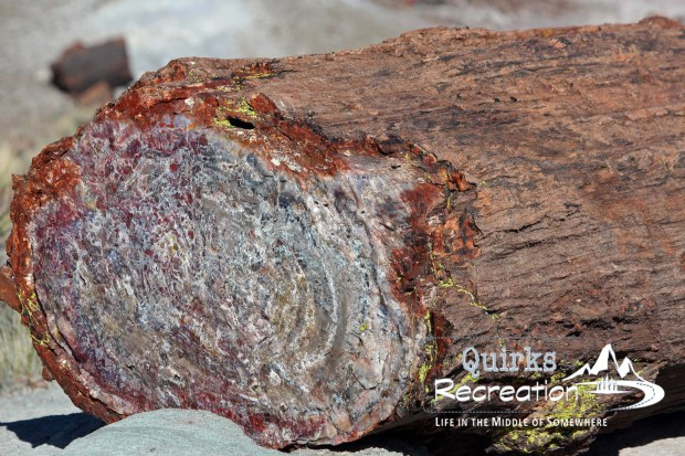 Up-close view of a log in Petrified Forest National Park