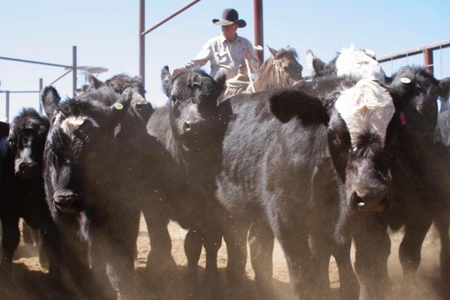 Triangle P Cattle Company - Quivira Coalition