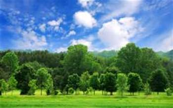 Lush trees and blue sky