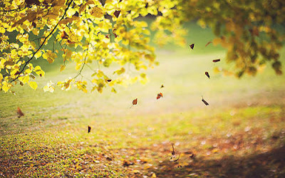 Sincere Girl Wallpaper The Falling Leaves Never Hate Wind Quote About Life