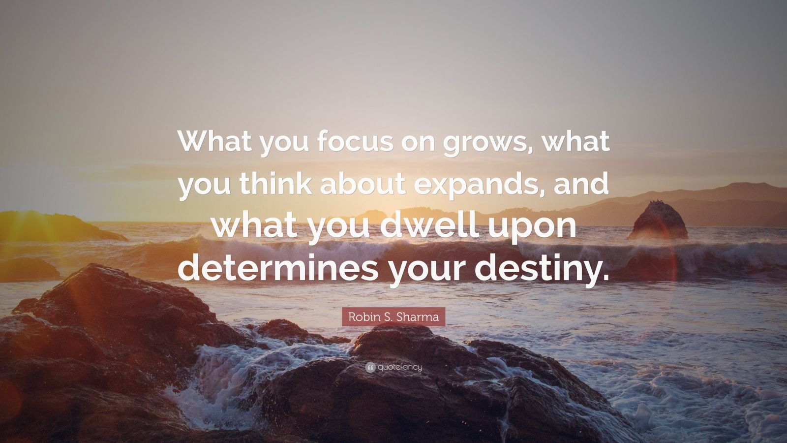 Theodore Roosevelt Wallpaper Quote Robin S Sharma Quote What You Focus On Grows What You