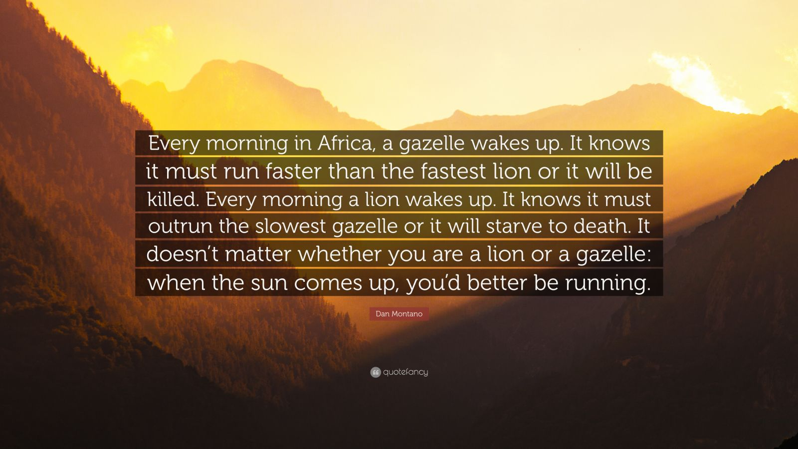 Conor Mcgregor Quote Wallpaper Dan Montano Quote Every Morning In Africa A Gazelle