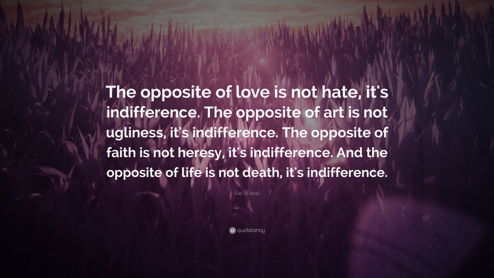 Theodore Roosevelt Quotes Wallpaper Elie Wiesel Quote The Opposite Of Love Is Not Hate It S