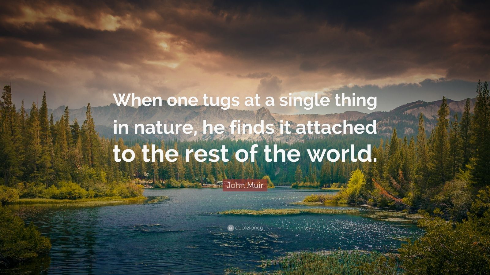 Theodore Roosevelt Wallpaper Quote John Muir Quote When One Tugs At A Single Thing In