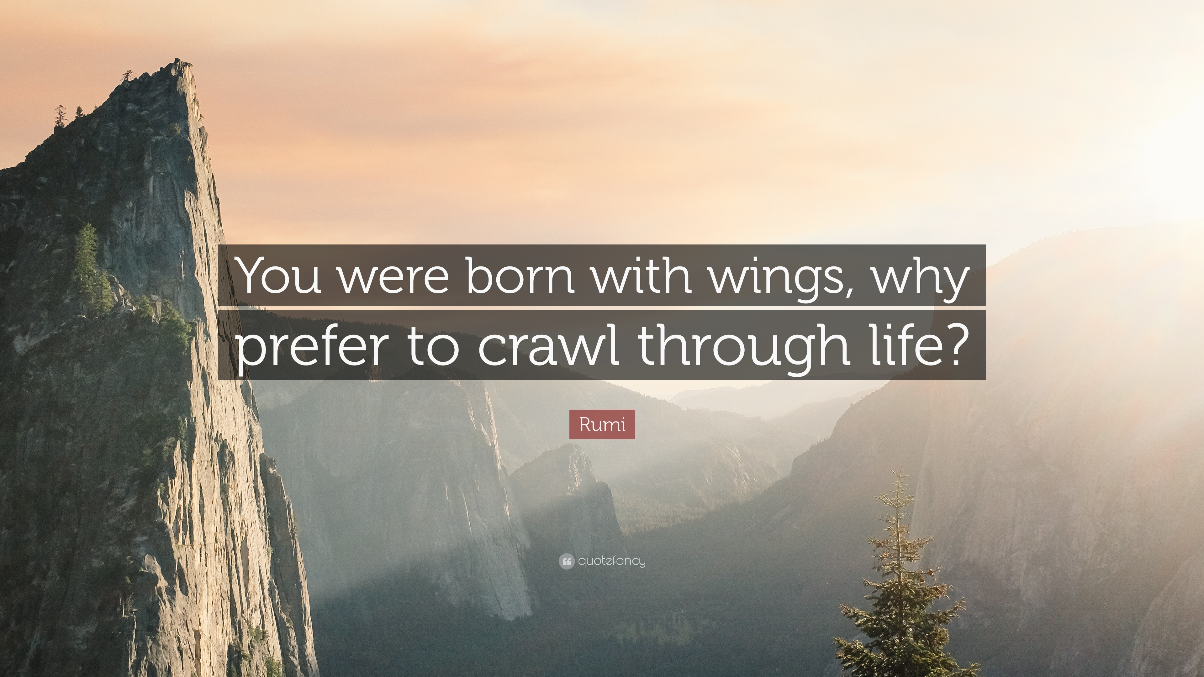 Zen Quote Wallpapers Rumi Quote You Were Born With Wings Why Prefer To Crawl