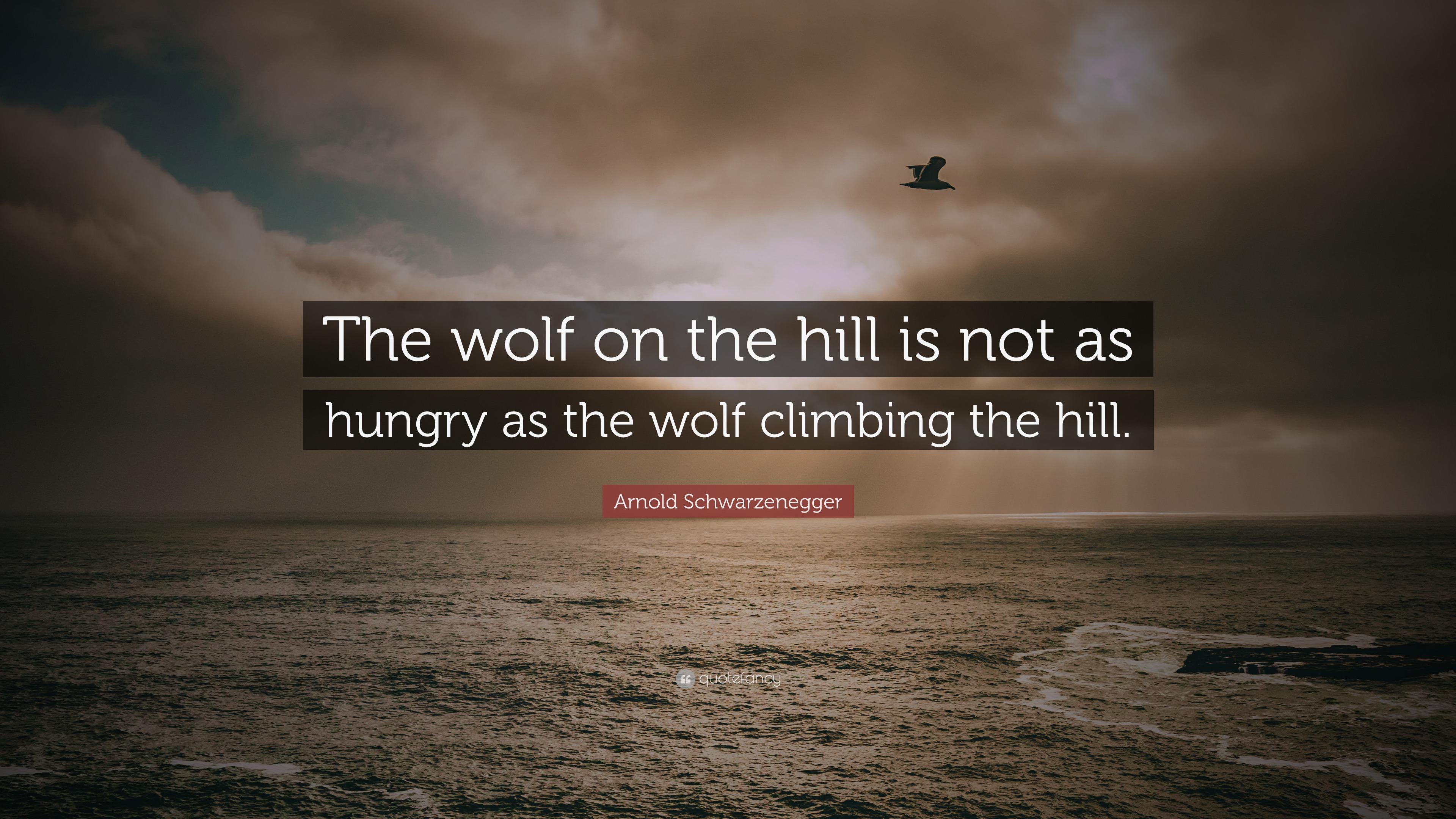 Arnold Schwarzenegger Wallpaper Quotes Arnold Schwarzenegger Quote The Wolf On The Hill Is Not