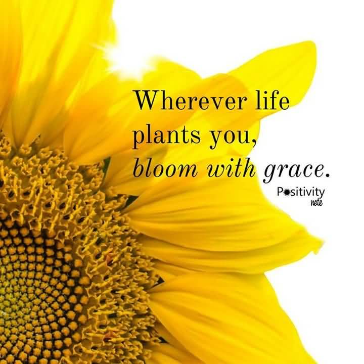 Best I Love You Quotes Wallpapers 25 Famous Quotes About Sunflowers With Sayings Quotesbae