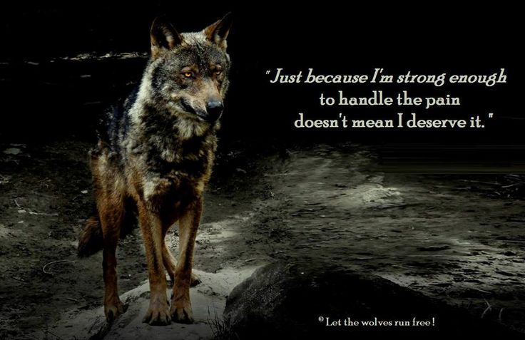 Lone Wolf Wallpaper Quote Inspirational Quotes About Strength Let The Wolves Run