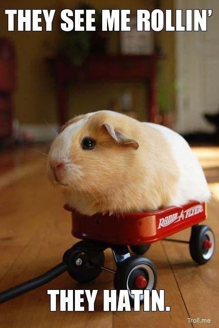 Top 25 Best Funny Animal Memes