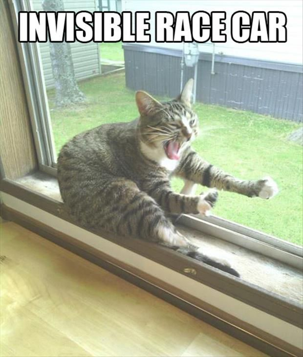 Top 25 Best Funny Animal Pics Quotes #Humor