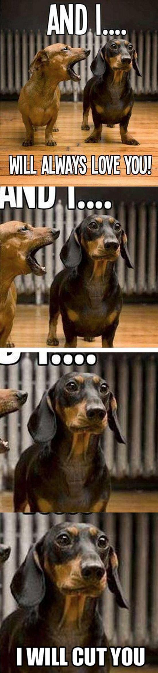 Large Of Dog Joke Meme