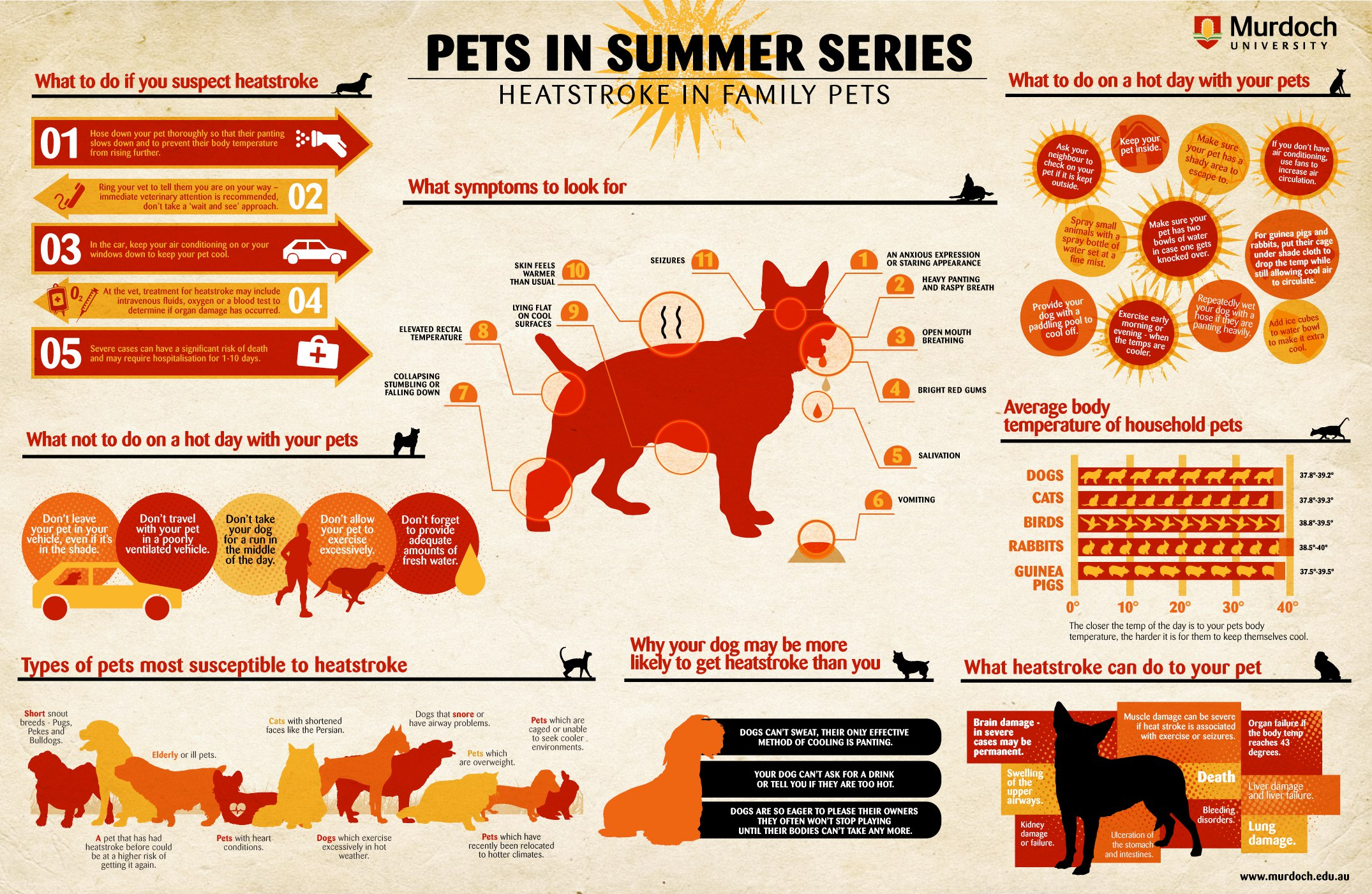 Heat Stroke In Dogs And Cats