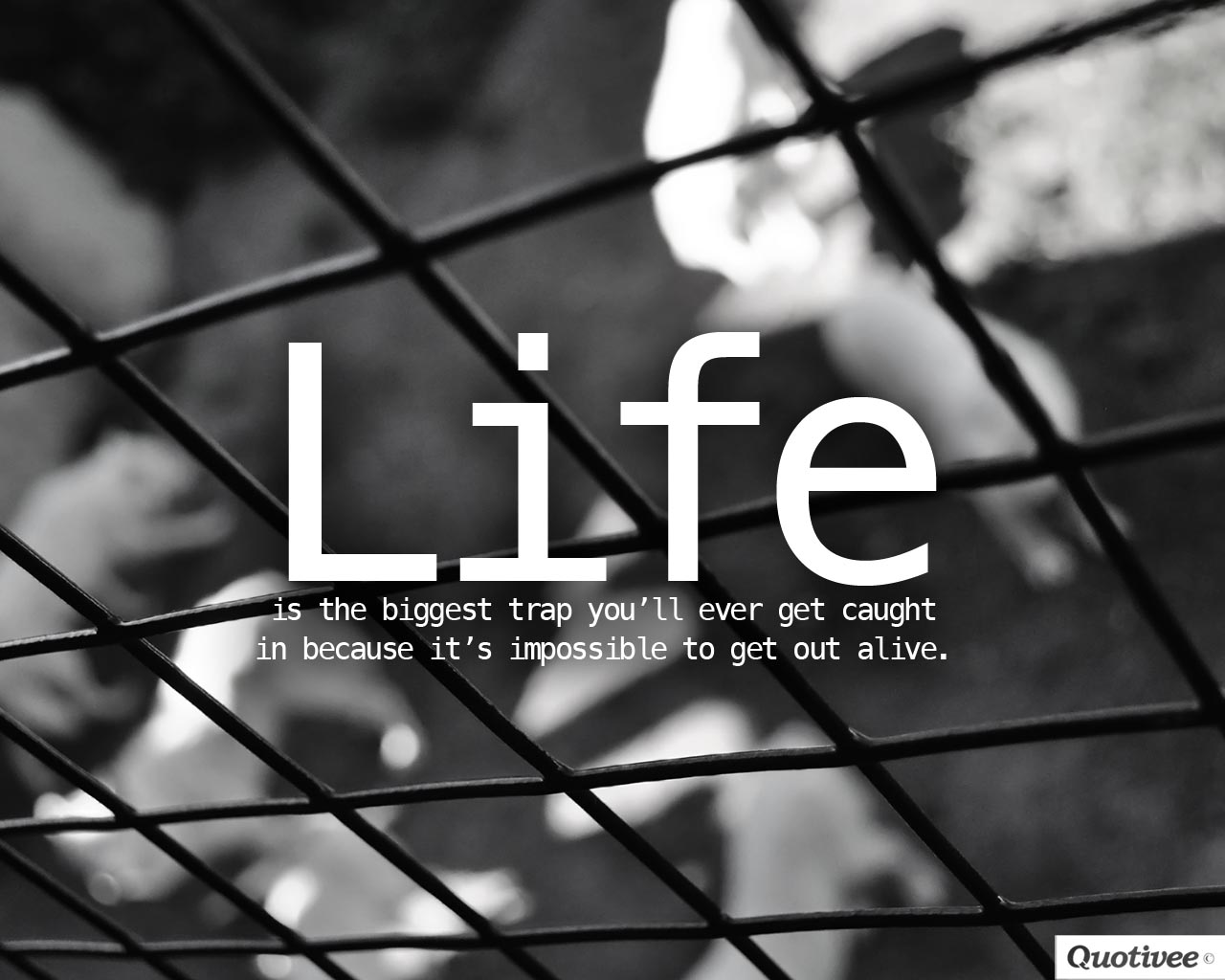 Www Inspirational Quotes Wallpaper Life Is The Biggest Trap Inspirational Quotes Quotivee