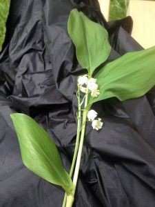 Soeur Pierrette's lily of the valley