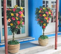 Cottage Farms Tropical Punch Braided Hibiscus Patio Tree ...