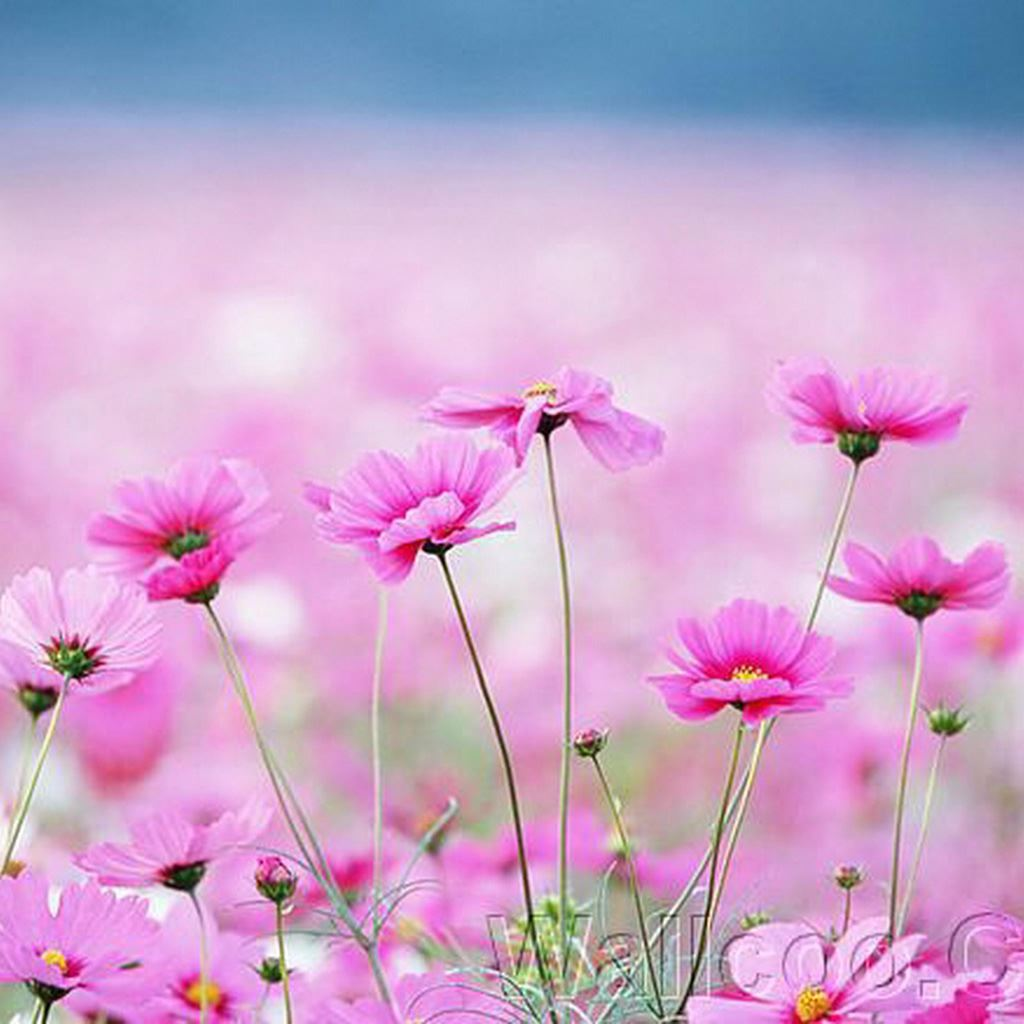 Lock Screen Wallpaper Iphone 4s Happy Galsang Flower Field Blur Ipad Wallpaper Download