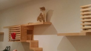 cat cafe orange tabby on shelf zoomed out