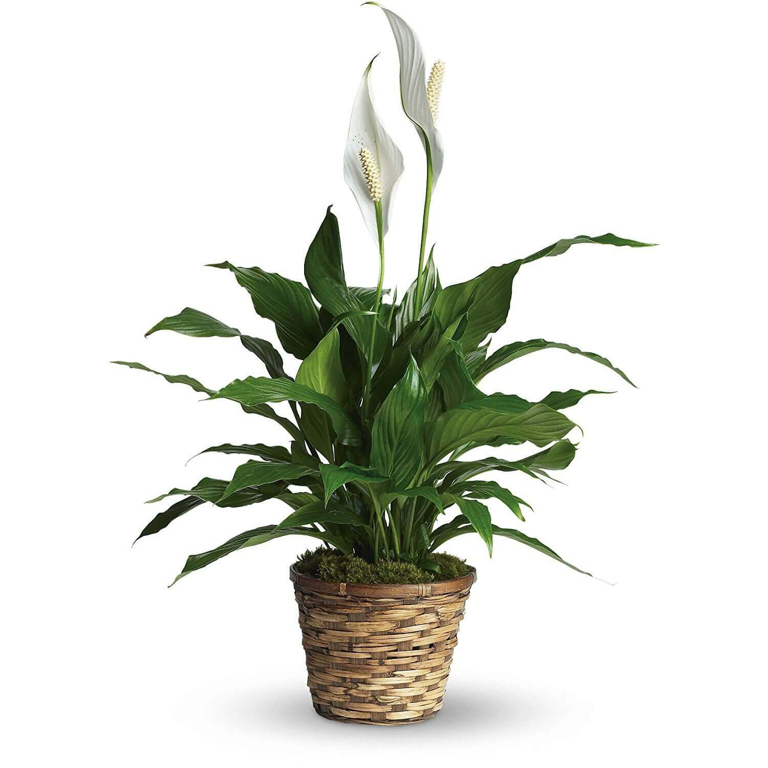 Indoor Plants For The Office 7 Best Indoor Plants That Survive In Limited Light Under The Roof