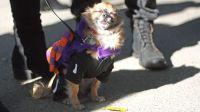 28 Dog Costumes That Will Cast a Love Spell on You [PHOTOS]