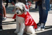 Pooches Showcase Costumes at 2014 Tompkins Square