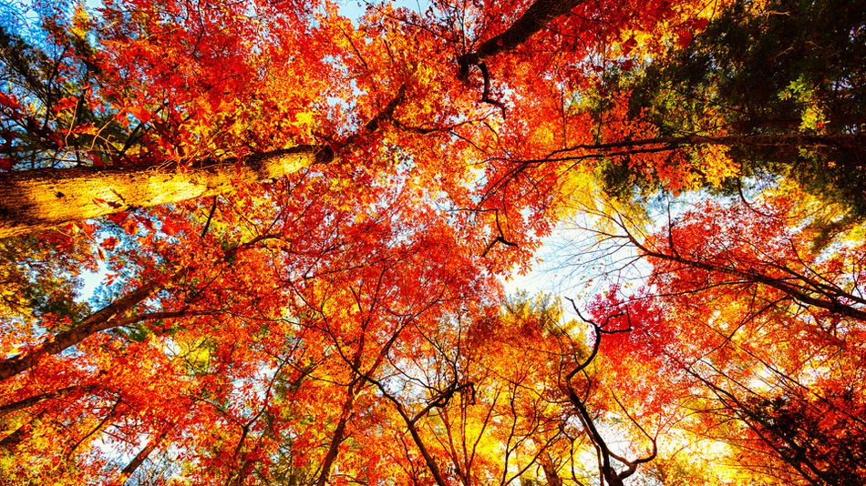 Free Fall Wallpaper Apps The Only Fall Foliage Map You Need To Plan A Perfect