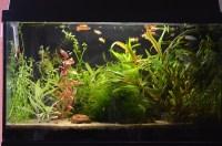 Aquarien Led Beleuchtung Erfahrung: Fluval spec xv