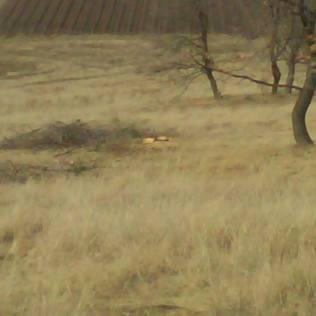 copac taiat cerna 6